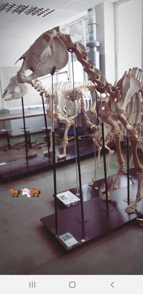 Tie eläinlääkäriksi käy Latvian lääkiksen kautta