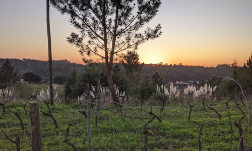 """Viinitilalle töihin lähtenyt Maria: """"Upeat auringonlaskut ovat työn parasta antia"""""""